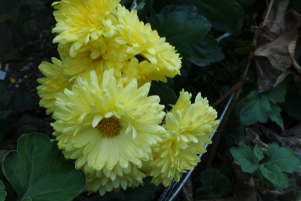 closeup view of lovely yellow flower