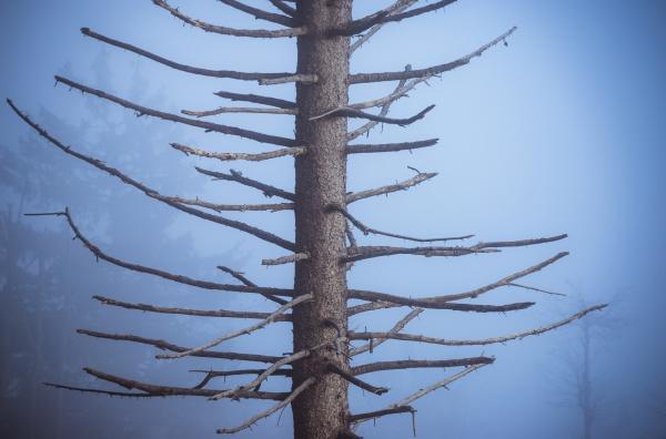 twigs of a fitr tree in