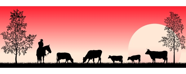 cowboy and grazing cows in the