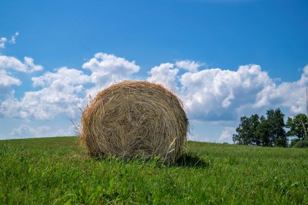 grass hay in a green grassy