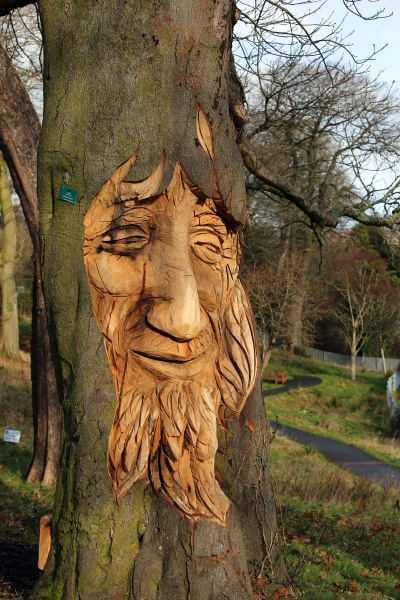 tree carving of a face