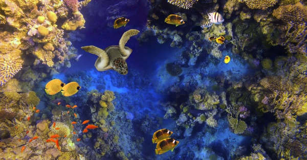underwater, world., coral, fishes, of, red - 29261435