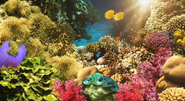 underwater, world., coral, fishes, of, red - 29273516
