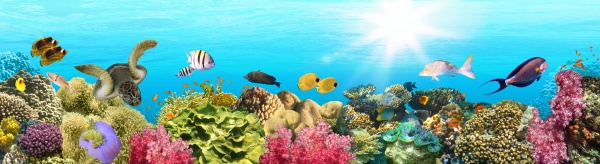 underwater paradise background coral reef wildlife