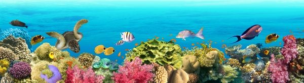 underwater, world., coral, fishes, of, red - 29284728