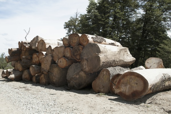 stack of firewood in forest patagonia