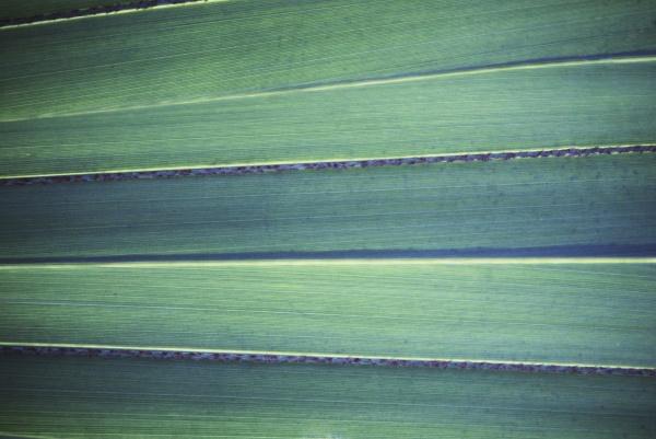 closeup of a palm leaf