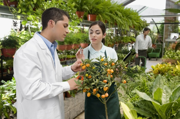 scientist examining a plant in a