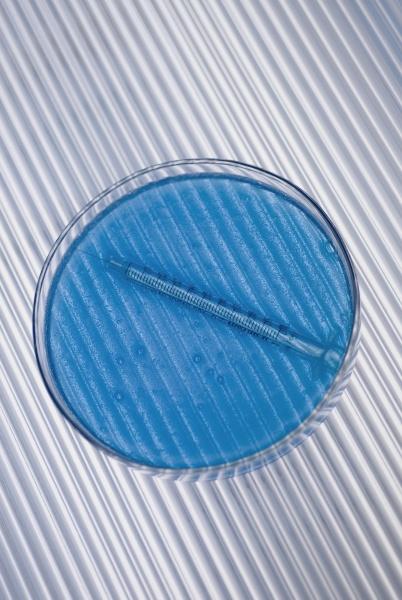 closeup of a petri dish with