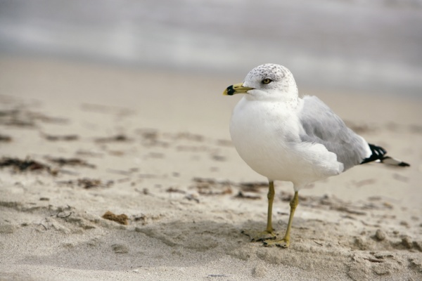 close up of a seagull on
