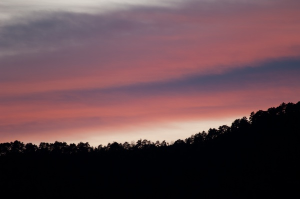 forest at sunset in the pyrenees