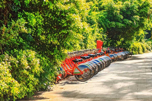bicycles stand in a row on