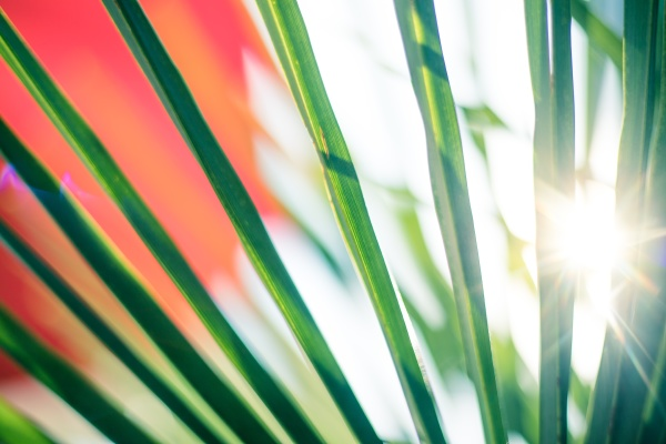 tropical feeling close up of palm