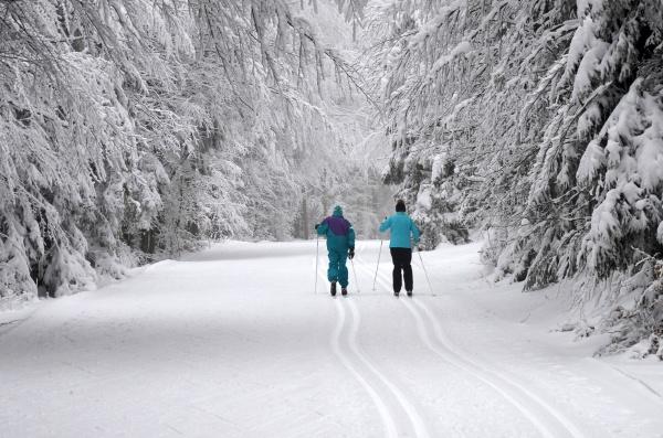 langlaufen, im, böhmerwald, (oberösterreich, , Österreich), - - 29618295