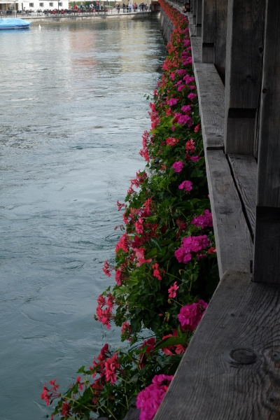 flowers in bloom on chapel bridge