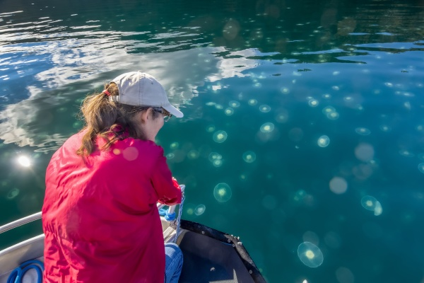 woman watching a smack of jellyfish
