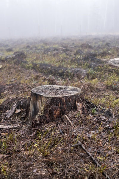 tree stump inside of a forest