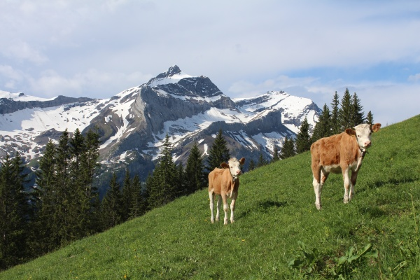 early summer in the swiss alps