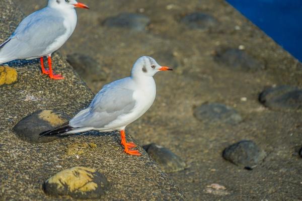 seagull group of katsushima canal