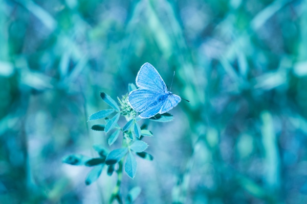 butterfly in the grass on a