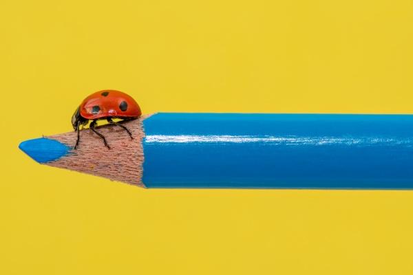 red ladybug walking on a blue