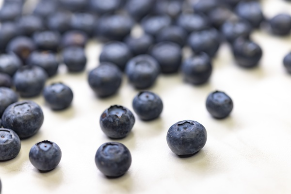 still life with blueberries on a