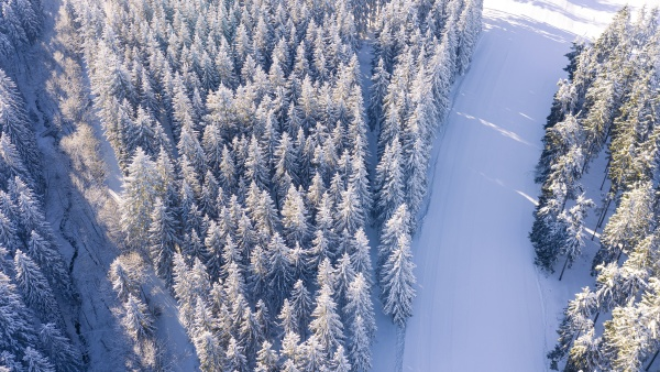 air view shows forest of snow