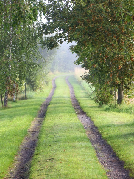 rural gravel road with fresh morning