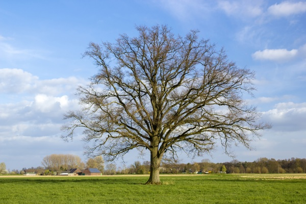 german countryside landscape with tree lower