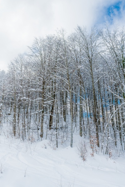winter snow covered trees in the