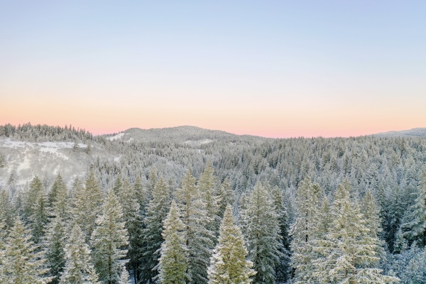 peaceful snowy forest covered by the