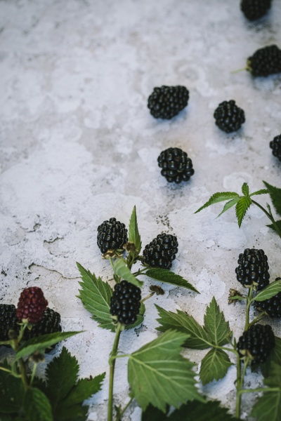 blackberries with leaves on a stone