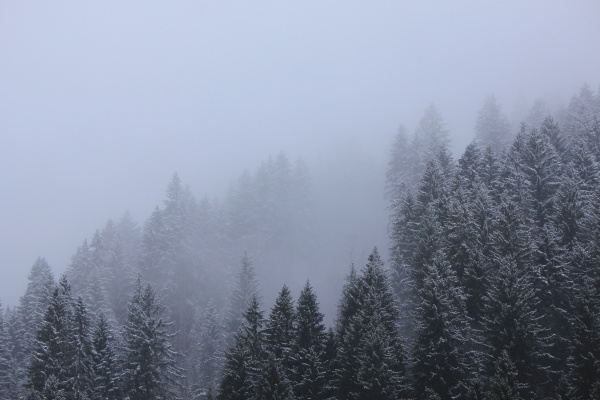 tree tops on a snowy spring