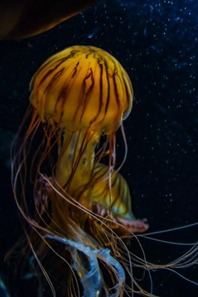 image of jellyfish poison jellyfish