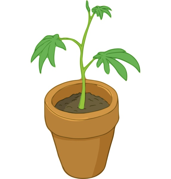 pot marijuana icon cartoon style