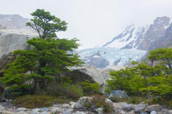 piedras blancas glacier view el chalten