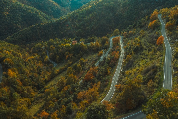 aerial view of a forest road