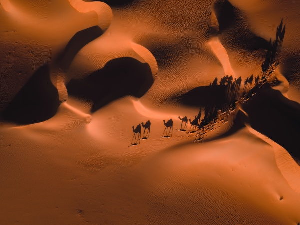 aerial abstract view of camels and