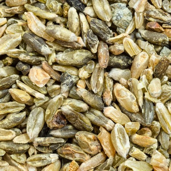 freekeh wheat grains close up