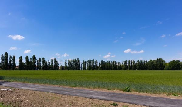 italian cultivation field of wheat ceral