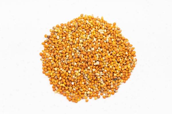 pile of chumiza siberian millet seeds