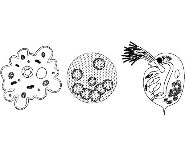 set of unicellular organism in doodle