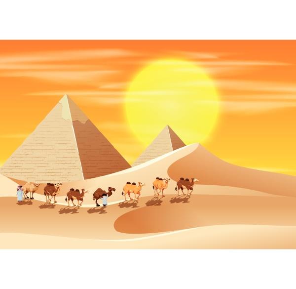 camels walking across the desert
