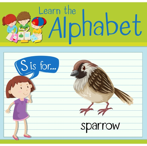 flashcard letter s is for sparrow