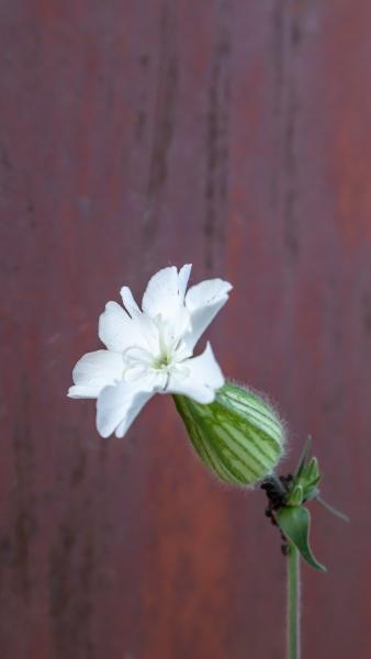 one white sandworm or resin flower