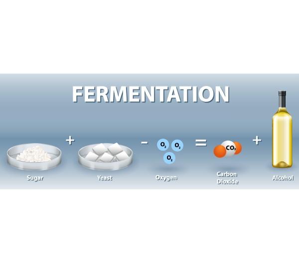 alcoholic fermentation chemical equation