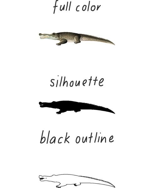 set of alligator in color silhouette
