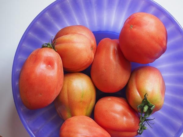 tomatoes vegetables food