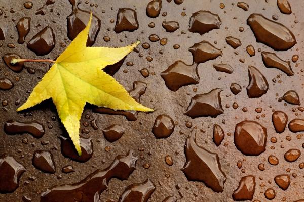 autumn leaf and raindrops
