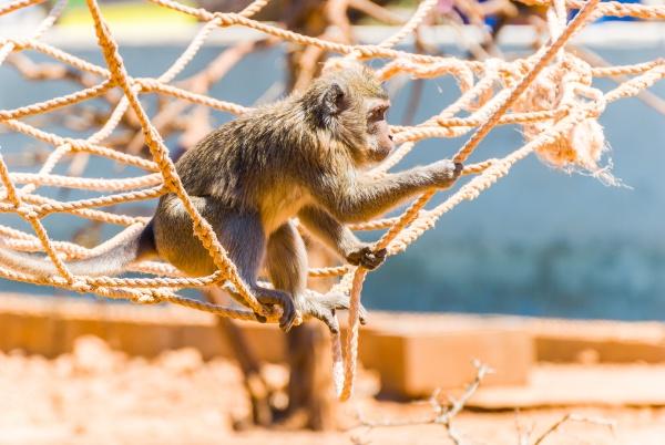 little monkey sa coma mallorca